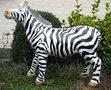 zebra beeld